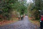 november skirm_099.png