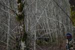 reindeer_057.png